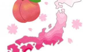 桜のようで桜じゃない?「花桃」(ハナモモ)ご存知ですか?
